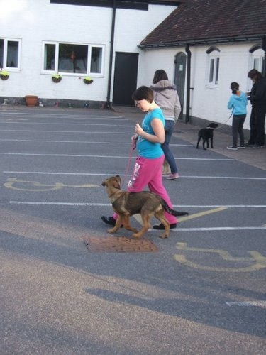 dogtraining2